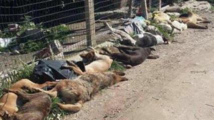 Agrigento, a Sciacca è strage di cani randagi: uccisi 30 animali con polpette avvelenate