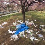 Giappone: fioritura dei ciliegi finita nella spazzatura