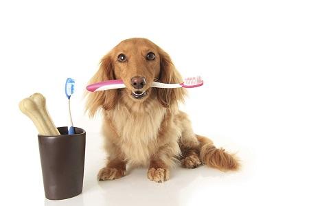 Alito cattivo nei cani: cause, prevenzione e rimedi