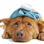 I 6 problemi di salute più comuni nei cani