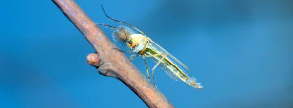 Talassomia: cos'è e come difendersi da questo insetto?