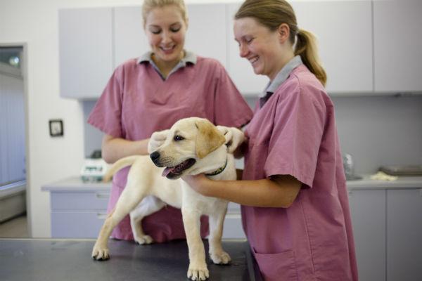 Come curare e prevenire il cimurro nei cani