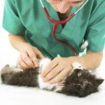 Come curare la congiuntivite nei gatti