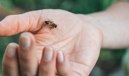 2 morti per le punture di api e vespe: cosa fare in caso di morso