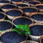 Açai: tutti i vantaggi di questo Super Fruit
