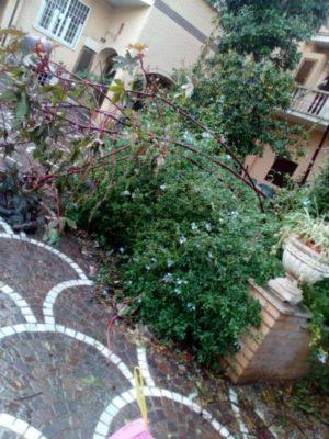 Roma, piovono alberi. Tre morti nella Regione Lazio