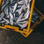 Marsala: maxi sequestro di pesce per i venditori abusivi