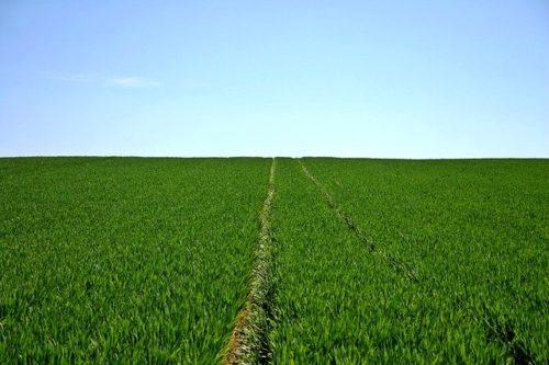 Marsala: presentato a Roma il Prosim, progetto per lo sviluppo agricolo