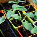 Orto sul balcone: come coltivare le proprie piantine a km zero