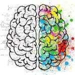 Whole Brain Model: cos'è e come funziona